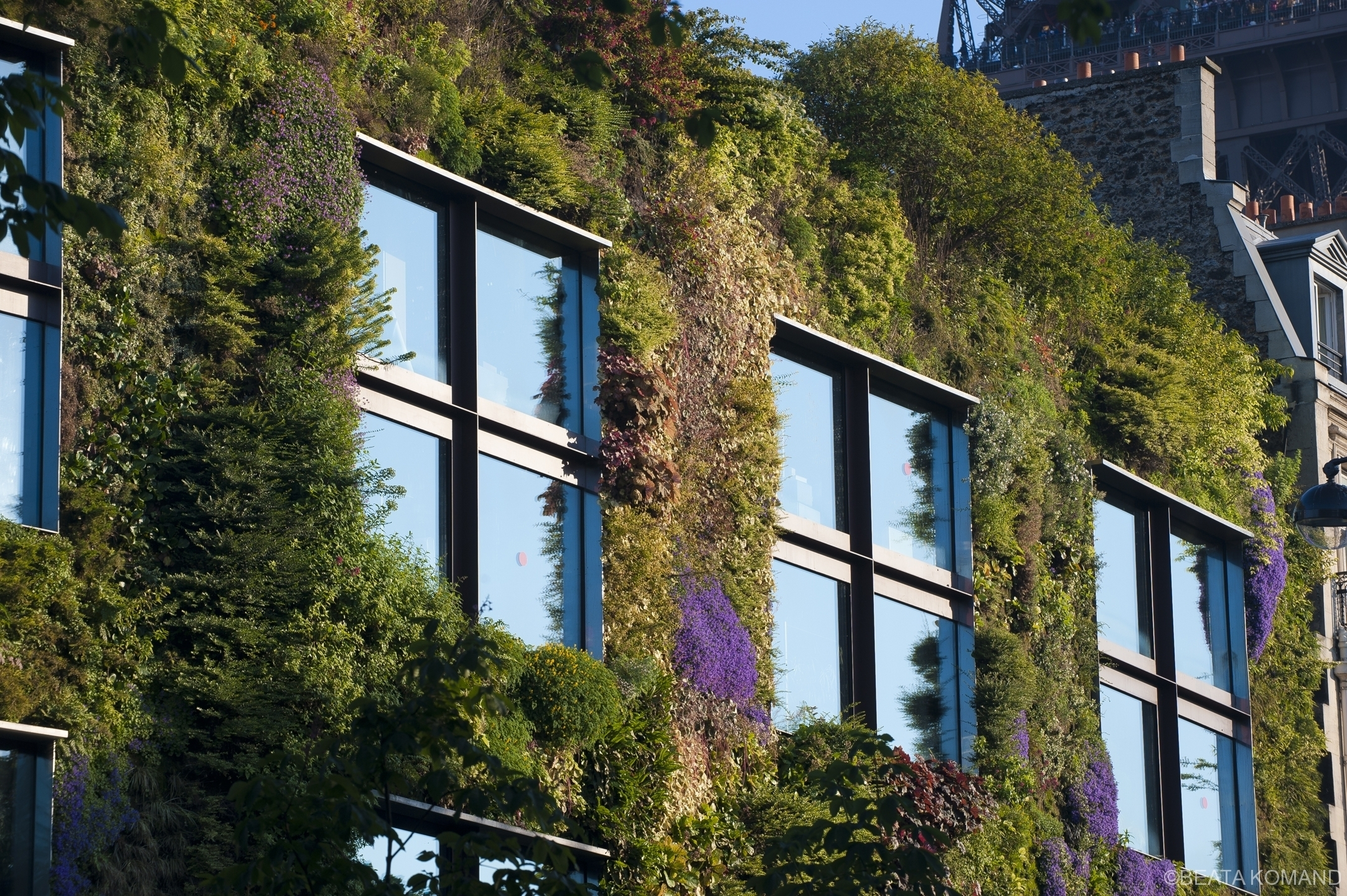Les fenêtres dans le mur végétal du Musee du Quai Branly; concepteur - botaniste Patrick Blanc, architechte - Jean Nouvel;